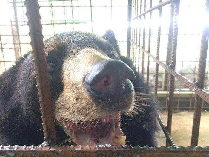 Urso sorri faceiro depois de ter seu excesso de língua retirado (Crédito: Reprodução)