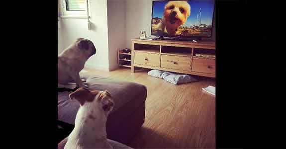 'Dog TV' oferece programação para cachorros (Crédito: Reprodução)