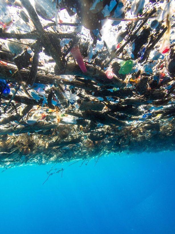 Ilha paradisíaca do Carine tem 8,2 km de lixo (Crédito: Caroline Power )