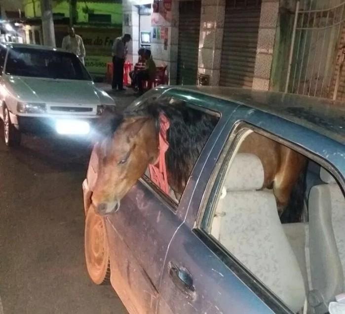 Homem colocou o cavalo no banco traseiro e dirigia pelo Centro de Três Pontas (MG) (Crédito: Reprodução / Redes sociais)