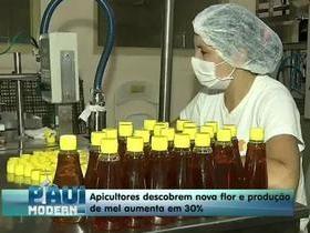 Apicultores descobrem nova flor e produção de mel aumenta em 30%