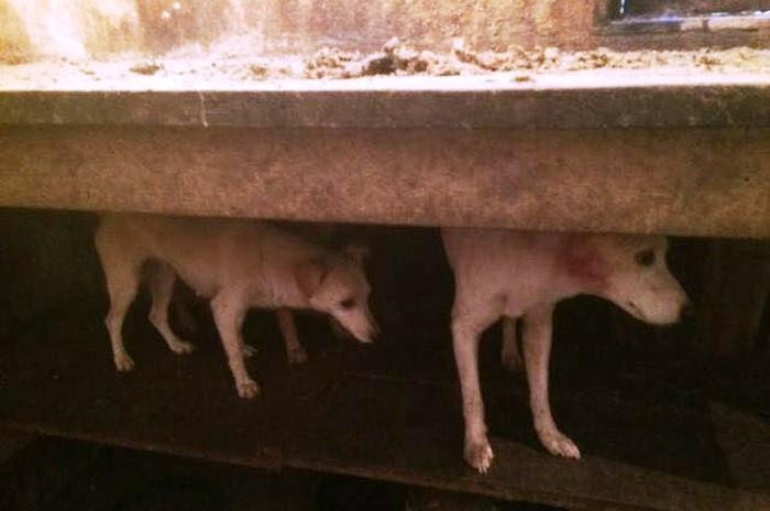 Cães estão em situação de abandono em cidade do Vale do Ribeira  (Crédito:  Divulgação/GPA)