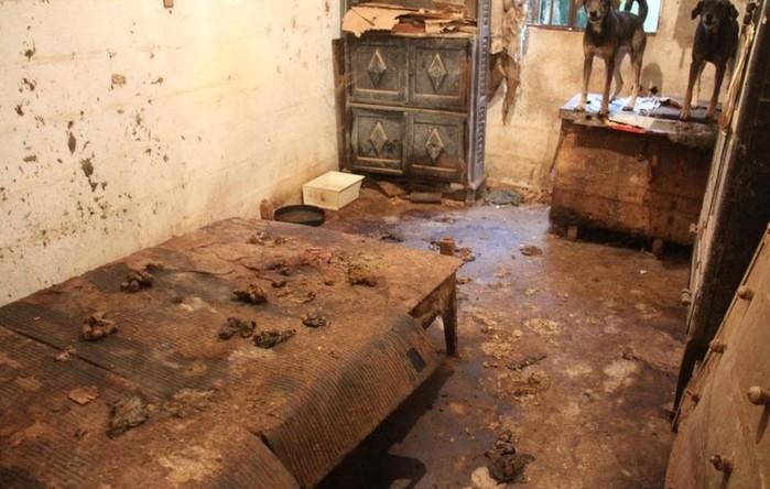Animais estão abandonados em propriedade em Jacupiranga, SP  (Crédito:  Divulgação/GPA)