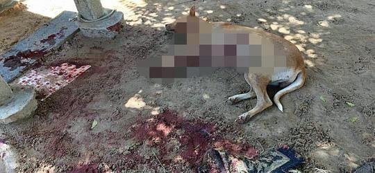 Cadela é morta a facadas durante invasão de domicílio em Parnaíba