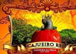 Exclusivo RMN: bastidores da Pesquisa DNA Cajueiro Rei do Piauí