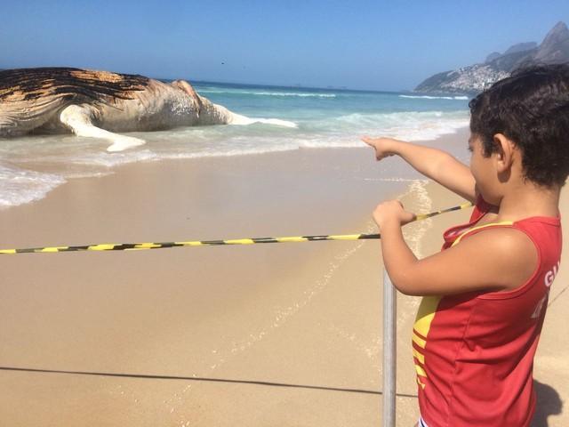 Baleia encalhou e morreu na Praia de Ipanema (Crédito: Bruno Albernaz/ G1)