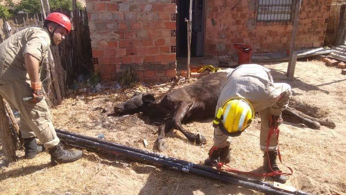 Animal morreu após a queda (Crédito: Kairo Amaral)