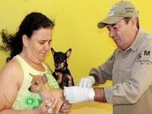 Município vacina cães e gatos neste sábado na cidade