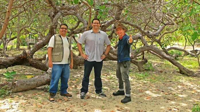 03 de Fevereiro, 2016. Biólogos Francisco Soares e Fabrício Amaral, com o Ecoaventureiro Alcide Filho. Bastidores da Pesquisa DNA Cajueiro Rei do litoral do Piauí.  (Crédito: Divulgação.)