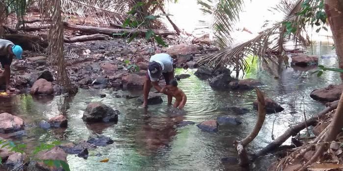 Campanha visa salvar as nascentes dos riachos