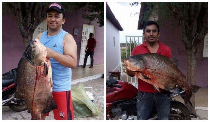 Peixe encontrado na Barragem do Estreito, em Francisco Macedo (Crédito: Reprodução)