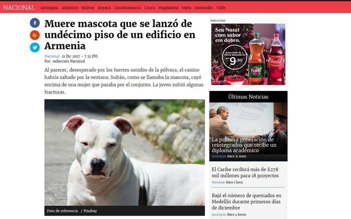 Assustado, cão se joga do 11º andar e cai sobre mulher na Colômbia