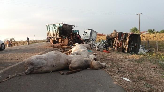 Cavalos mortos após acidente na BR-316, no Maranhão (Crédito: PRF-MA)