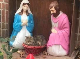 Gato 'substitui' menino Jesus em presépio e chama atenção