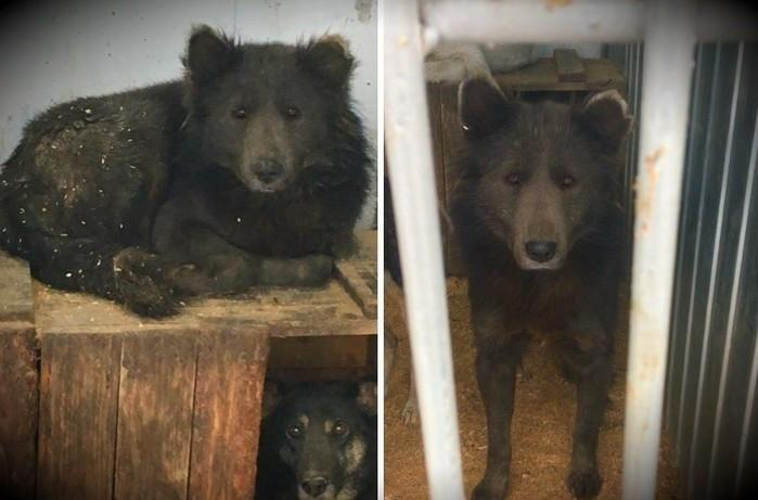 Cão-urso é capturado e intriga internautas