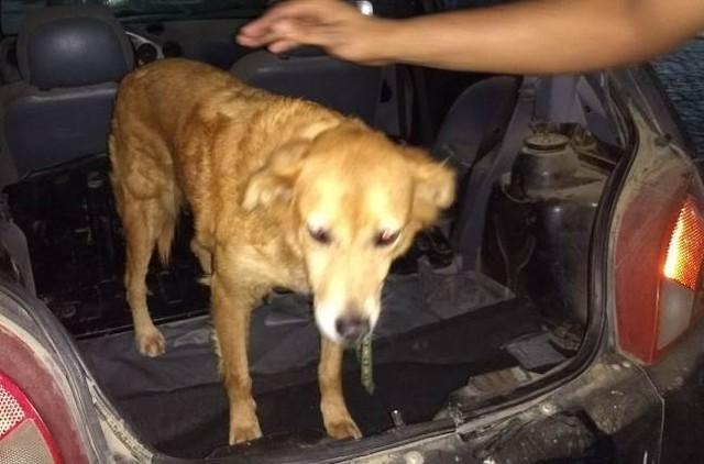 Idoso é preso acusado de abusar sexualmente de cadela