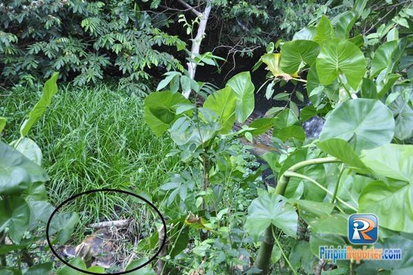Corpo encontrado em Piripiri (Crédito: Piripiri repórter)