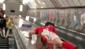 Jovem se dá mal ao deslizar de corrimão de escada e vídeo bomba
