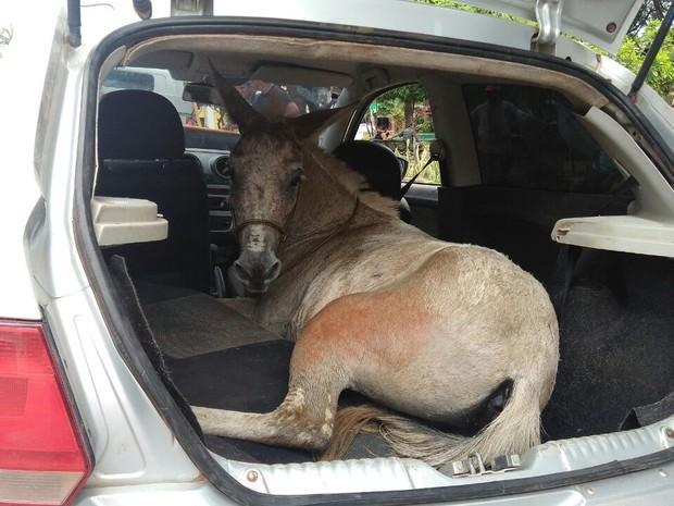 Burro foi encontrado em carro