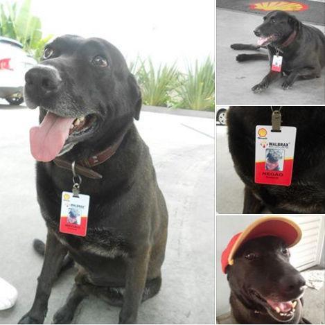 Cachorro adotado em posto é promovido a funcionário do mês