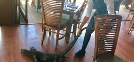 Garçonete impressiona ao expulsar lagarto gigante de restaurante