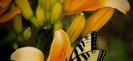 Os bichos que fazem as flores frutificar