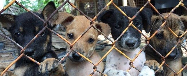 Coreia do Sul fecha maior mercado de carne de cachorro
