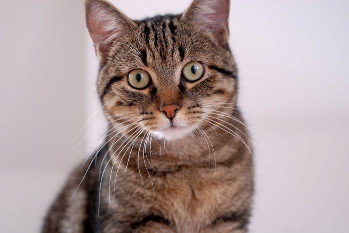 Transtorno raro faz homem pensar que seu gato é um espião