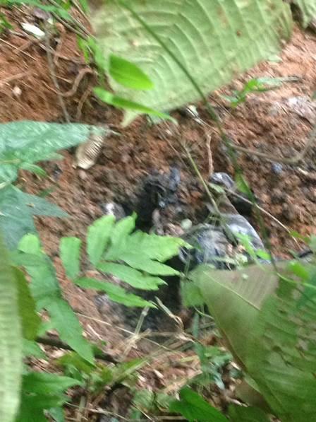 Polícia encontra cemitério clandestino em Angra dos Reis