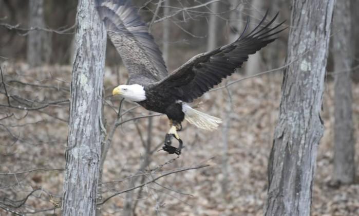 Animal foi visto carregando uma longa corrente durante voo (Crédito: Reprodução)