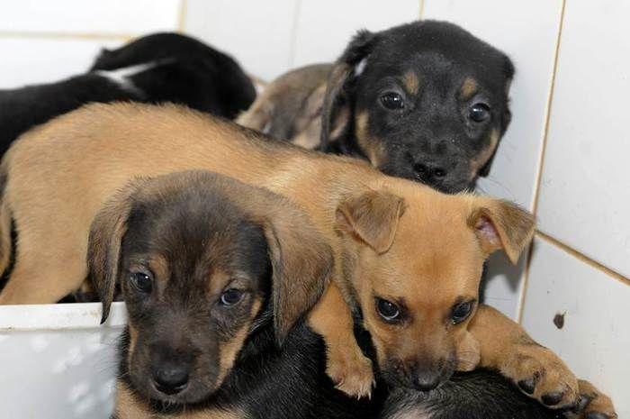Câmara aprova lei contra extermínio de cães e gatos por zoonoses