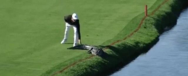 Golfista espanta jacaré com tapinha na cauda durante competição