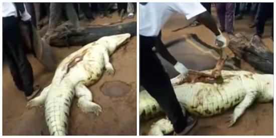 Moradores matam crocodilo e encontram corpo de menino de 8 anos