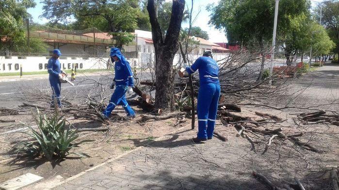 Equipes da prefeitura cortam árvores mortas na Frei Serafim (Crédito: Reprodução)