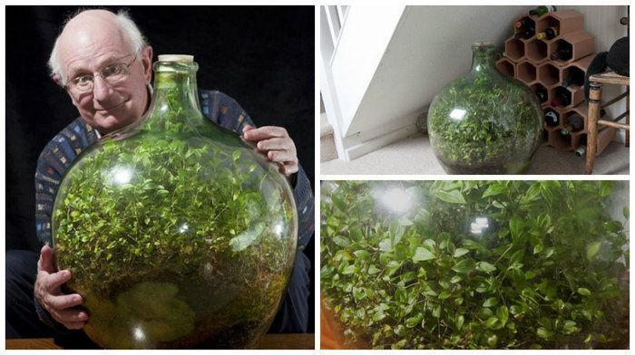 Idoso mantém planta dentro de garrafa e não a rega há 45 anos