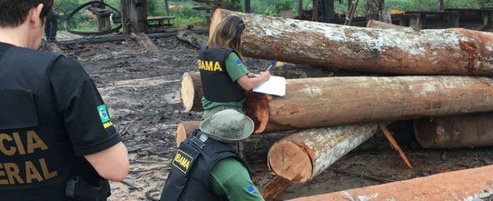 Polícia Federal investiga extração ilegal de madeira no Maranhão