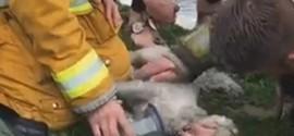 Bombeiro faz respiração boca a boca para salvar cão após incêndio