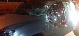 Empresário morre após atropelar búfalo em rodovia em São Paulo