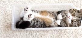Gato japonês é o animal mais visto no YouTube, segundo o Guinness