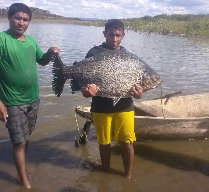 Peixe de 30 kg é pescado na Barragem do Estreito