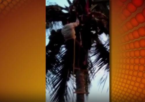 Homem é resgatado após ficar preso em coqueiro de 30 metros