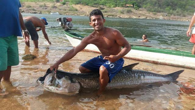 Pescadores fisgam um peixe gigante do mar no rio São Francisco