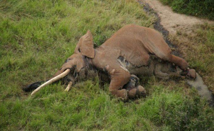 Ong encontrou o corpo do animal antes dos caçadores (Crédito: Reprodução)