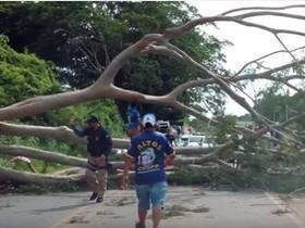 Quedas de árvores estão marcando o período chuvoso em Teresina