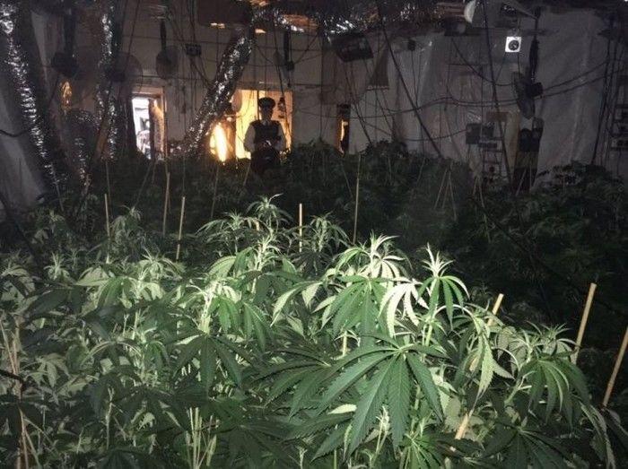 Polícia encontra 'floresta de maconha' em apartamento