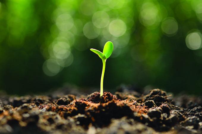 Mesmo quando não há umidade no solo, as raízes dão seu jeitinho (Crédito: Reprodução)