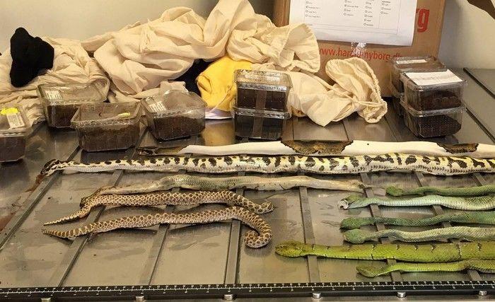 Polícia encontra cobras, aranhas e escorpiões em 'caixas de sapato'