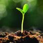 Plantas se guiam pelo som para encontrar água, diz estudo