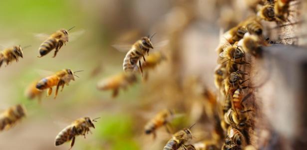 Roubo de milhões de abelhas choca moradores a Áustria