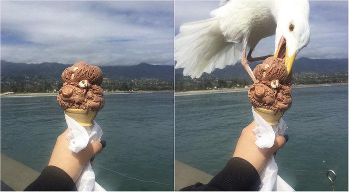 Gaivota rouba sorvete de garota e imagens viralizam na internet